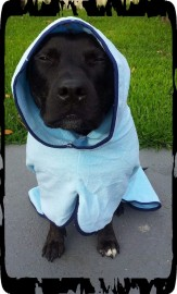 Dog Drying Coats - Blue